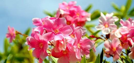 自分の色の花